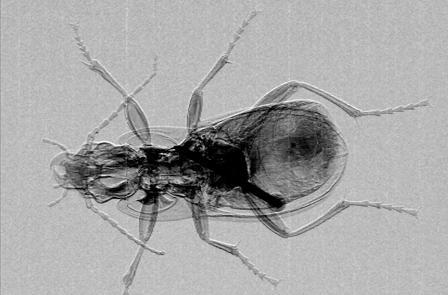 beetle2(448x295)